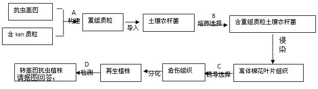 请据图回答:   (1)A过程需要的酶有_____________________。   (2)B过程及其结果体现了质粒作为运载体必须具备的两个条件是___________。   (3)C过程的培养基除含有必要营养物质、琼脂和激素外,还必须加入___________。   (4)科学家发现转基因植株的卡那霉素抗性基因的传递符合孟德尔遗传规律。   将转基因植株与_____________杂交,其后代中抗卡那霉素型与卡那霉素敏感型的数量比为1:1。   若该转基因植株自交,则其后代中抗卡那霉素型与卡