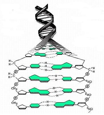 遗传病类型_检测人类遗传病 预防人类遗传病