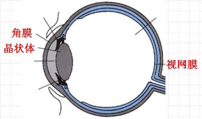 远视眼及其矫正_透镜的考点之远视眼与近视眼的成因及其矫正